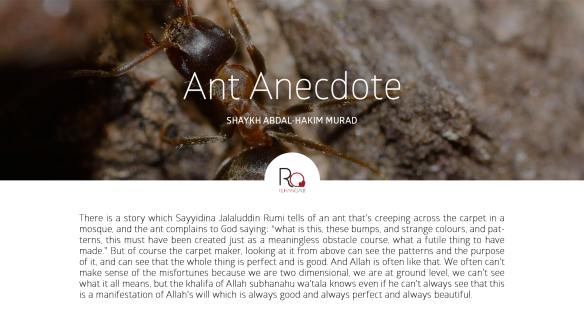Ant-Anecdote-by-Shaykh-Abdal-Hakim-Murad
