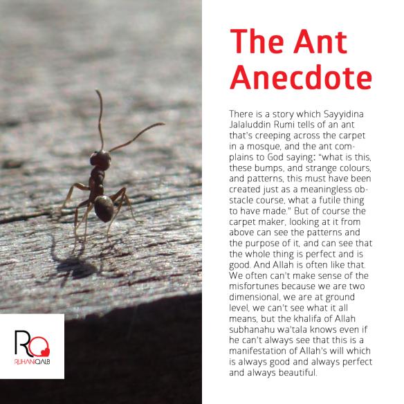 Ant-Anecdote